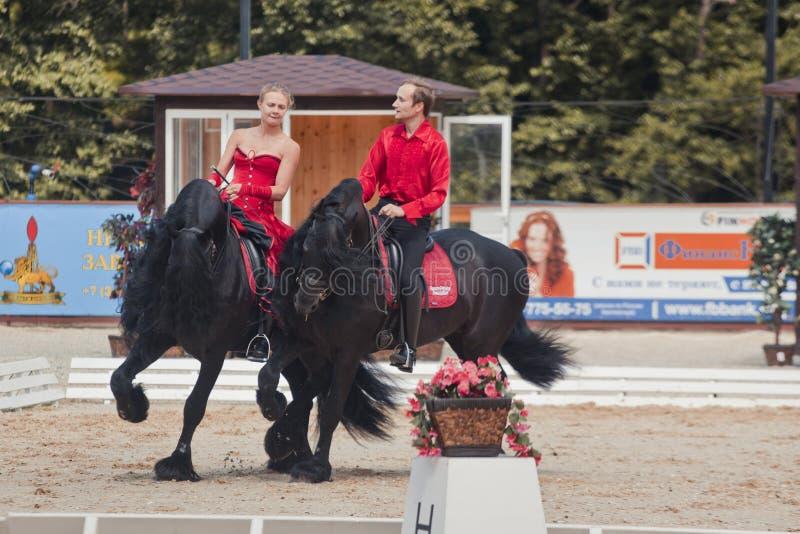 在黑白花的马的探戈 免版税库存照片