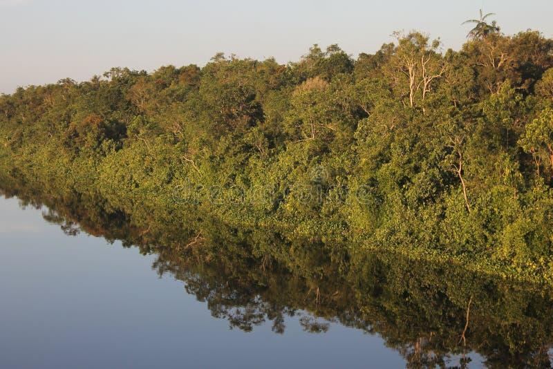 在水的反射树 库存照片