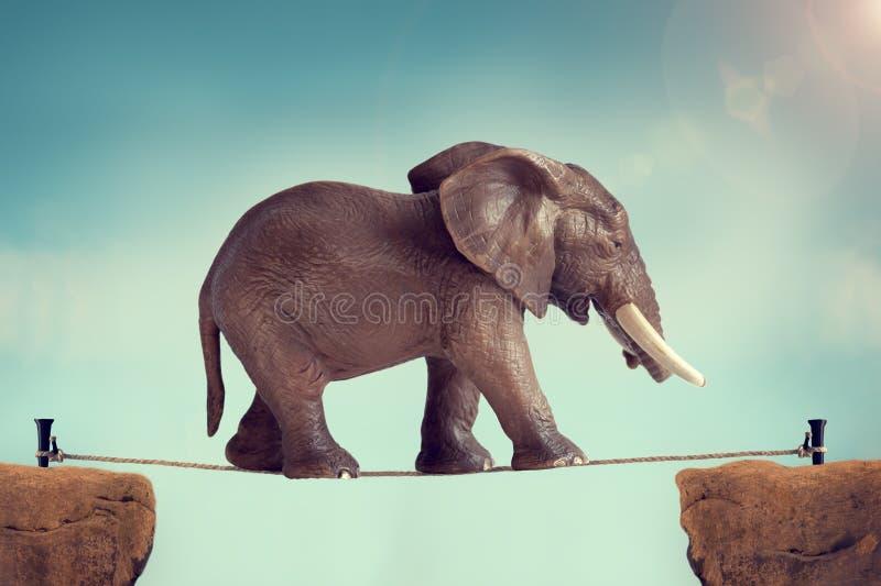 在绳索的大象 免版税库存照片