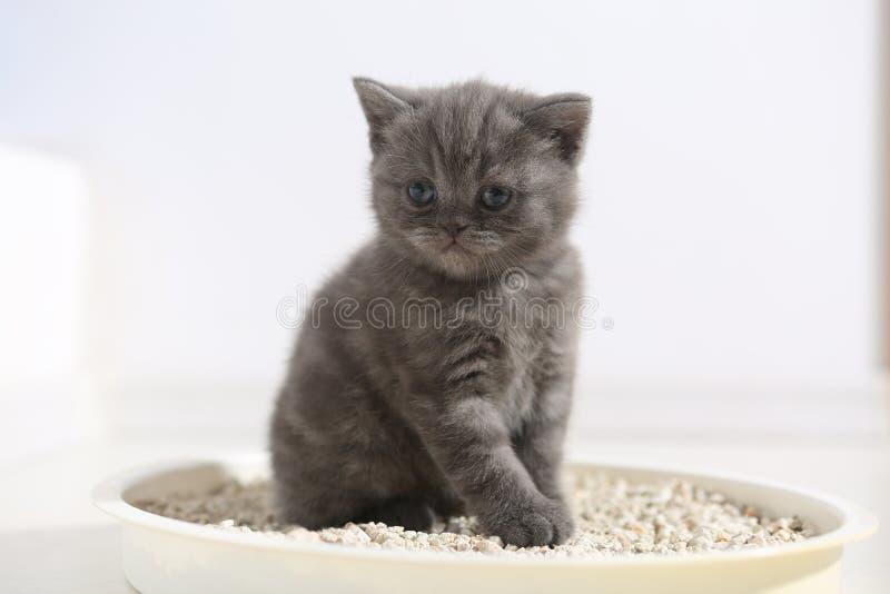 在他的废弃物的逗人喜爱的小猫 免版税库存照片