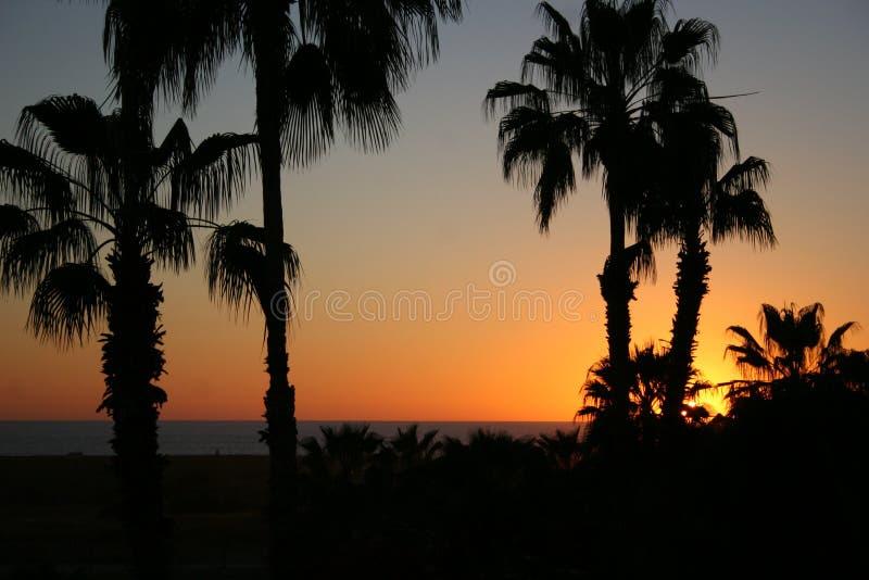 棕榈树日落 免版税库存照片