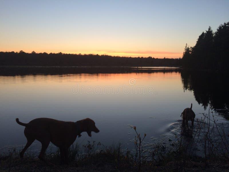 在水的狗 库存照片