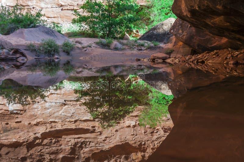 在水的猎人峡谷供徒步旅行的小道默阿布犹他的反射 免版税库存照片