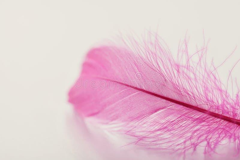 在轻的背景您的设计的,桃红色颜色的嫩羽毛 免版税库存照片