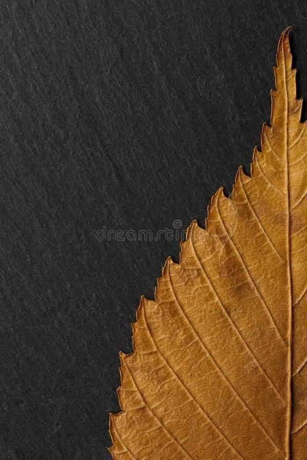 在黑石头背景纹理的干燥秋天叶子  免版税库存照片
