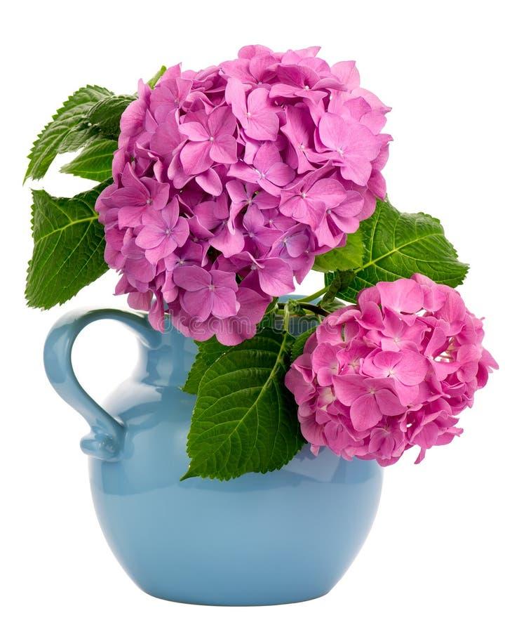 在水罐的八仙花属 免版税库存照片