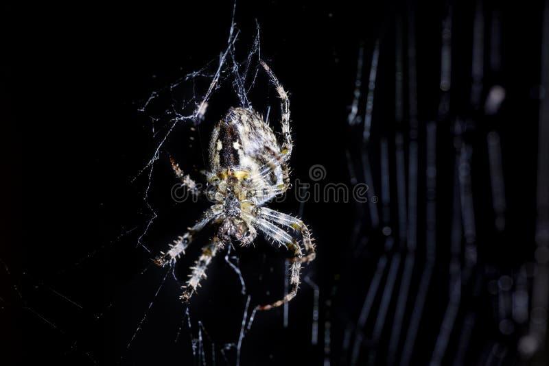 在黑背景上的蜘蛛和蜘蛛` s网 攀登网的蜘蛛纲的动物 极端接近的宏观图象 图库摄影