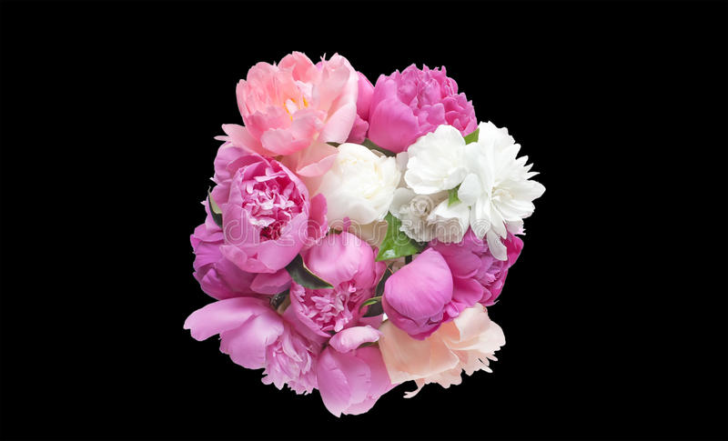 在黑背景开花桃红色和红色隔绝的花束牡丹 免版税库存照片