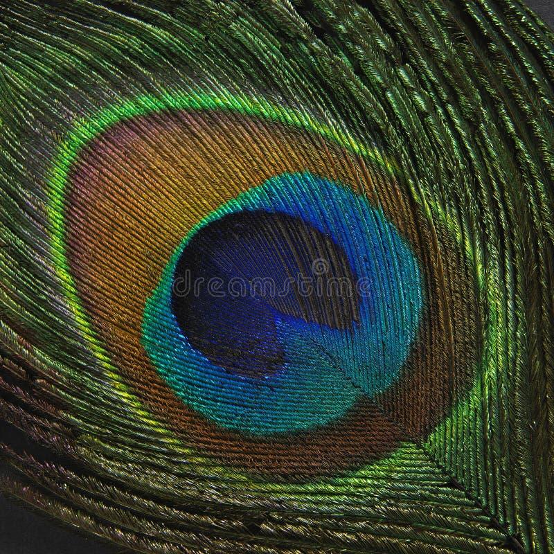 在黑背景的孔雀羽毛 免版税库存图片