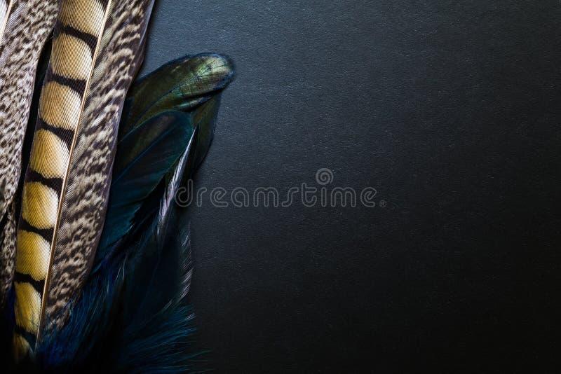 在黑背景的孔雀羽毛 库存图片
