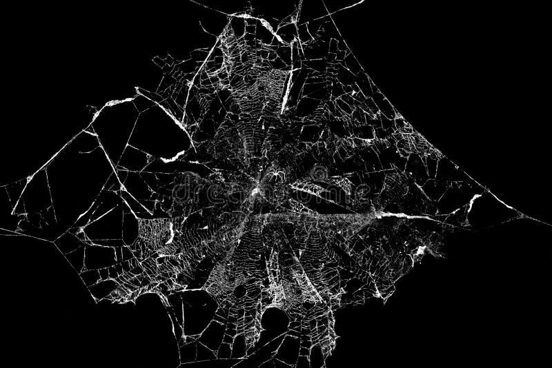 在黑背景的抽象Spiderweb 向量例证