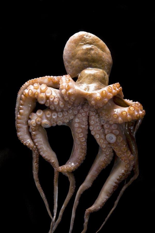 在黑背景的章鱼 免版税库存照片