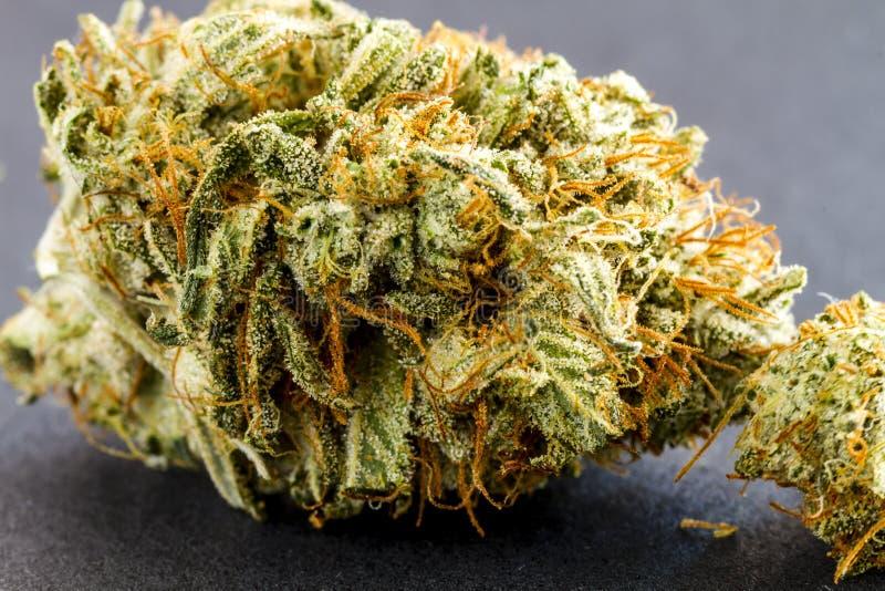 在黑背景的医疗大麻芽 库存照片