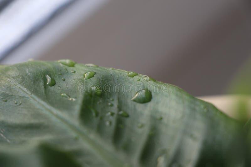 在绿色叶子植物的水下落 库存照片