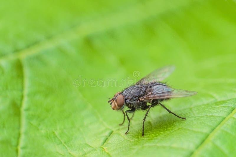 不纯, 有害健康, 昆虫, 叶子, 有限, 宏指令, 自然, 本质, 寄生生物图片