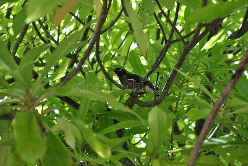 在绿色叶子的鸟 库存照片
