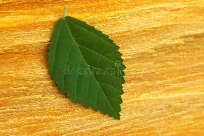 在黄色吠声的绿色叶子 免版税库存图片