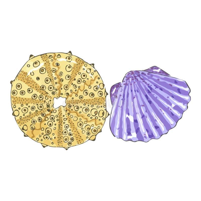 在黄色和紫罗兰色颜色的海壳 向量例证