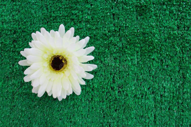在绿色塑料草bakcground的白色塑料花 免版税库存照片