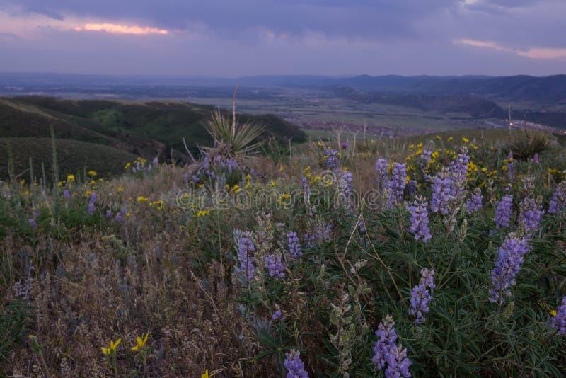 在绿色山的野花 免版税图库摄影
