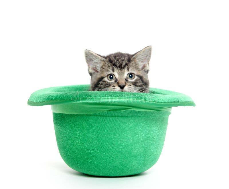 在绿色帽子的逗人喜爱的平纹小猫 库存图片