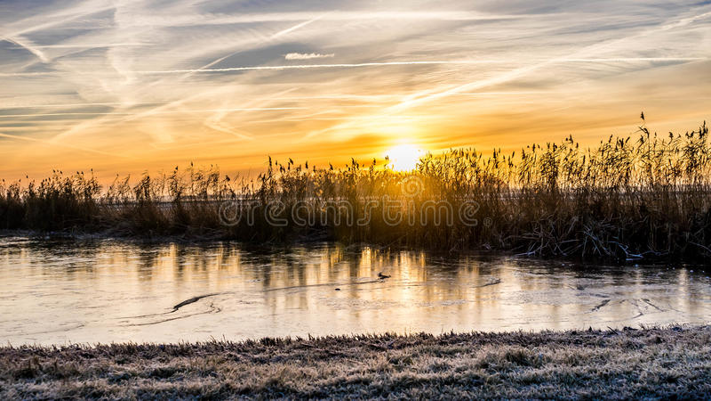 在黄色早晨光的四季不断的草 图库摄影