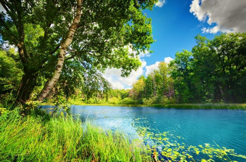 在绿色春天夏天森林里清洗湖 免版税库存图片