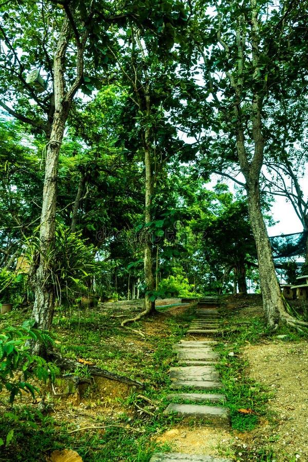 在绿色树之间的脚步行在密林 免版税库存图片