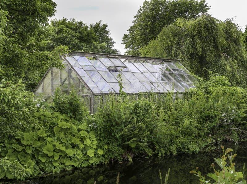 在绿色植物后的温室 库存照片