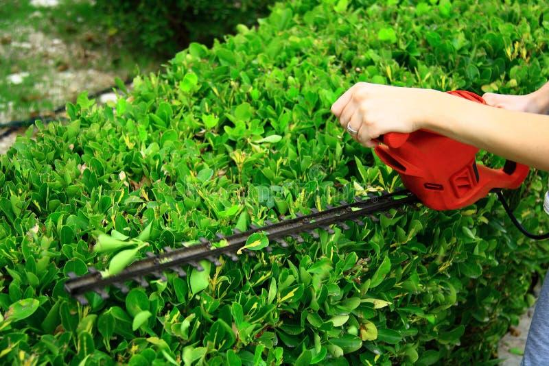 在绿色灌木的修剪工具 免版税库存照片