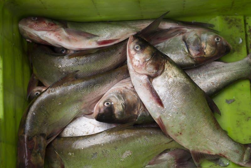 在绿色篮子的新鲜的Catched鱼 库存照片