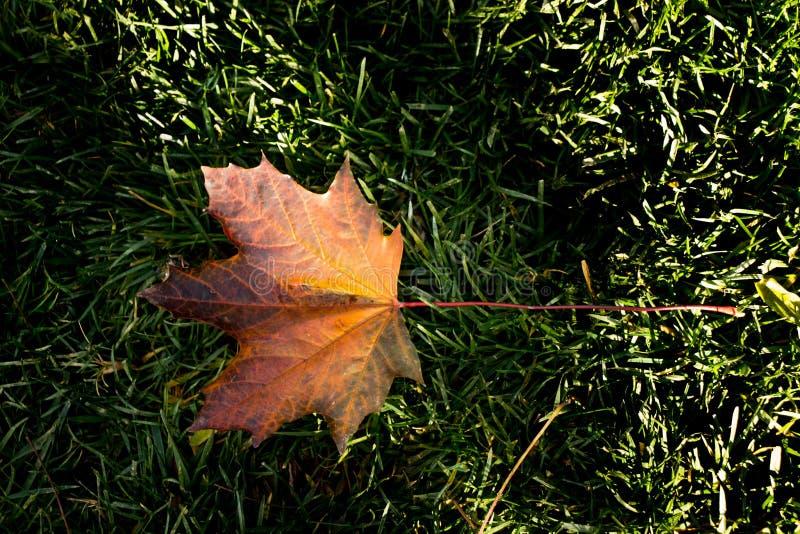 在绿色背景安置的干燥叶子 免版税库存图片