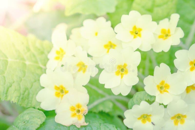 在绿色背景的白花 免版税库存图片