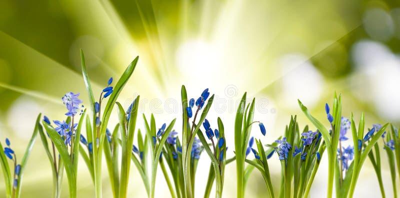在绿色背景的美丽的花 免版税库存图片