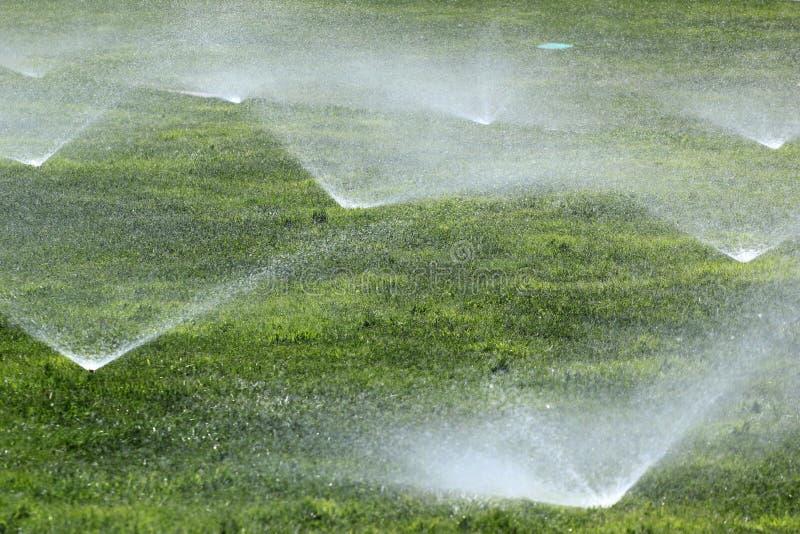 在绿色草坪的喷水隆头 库存照片