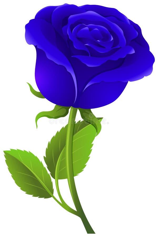 在绿色词根的蓝色玫瑰 向量例证