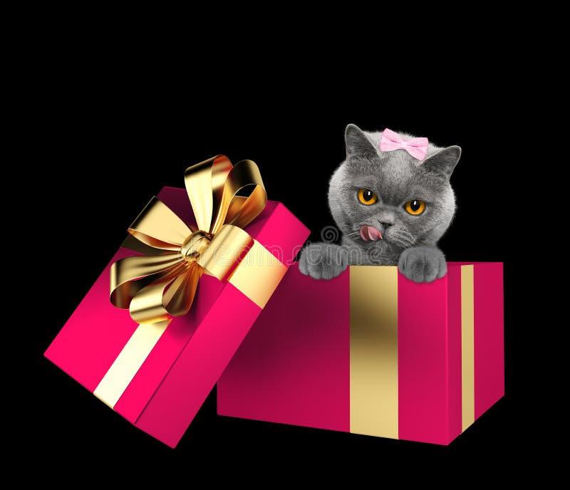 在黑色隔绝的一个桃红色当前箱子的逗人喜爱的猫 库存照片