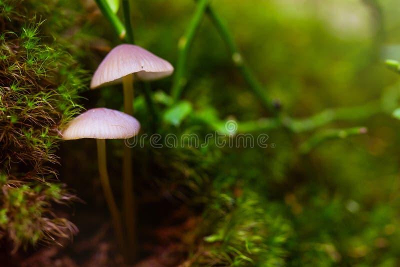 在绿色青苔的特写镜头真菌 免版税库存图片