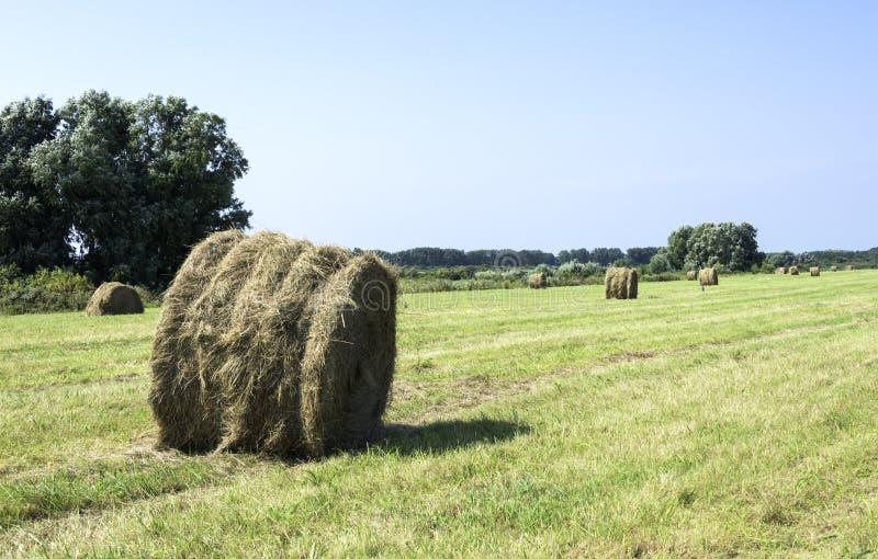 在绿色领域的干草捆在荷兰 库存图片