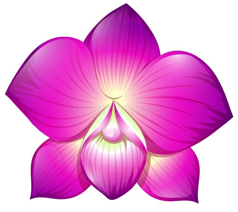 在紫色颜色的兰花 库存例证