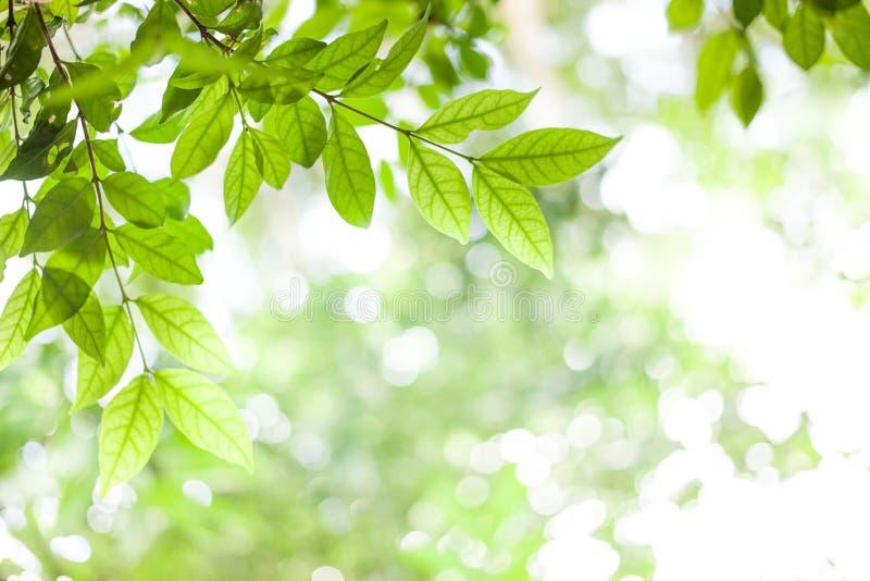 在绿色bokeh阳光背景的绿色叶子 免版税库存图片