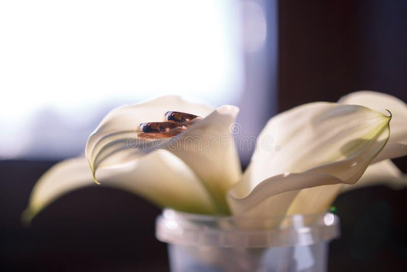 Download 在水芋属的瓣的婚戒 库存照片. 图片 包括有 新鲜, 颜色, 首先, 开花, beautifuler, 环形 - 72359848