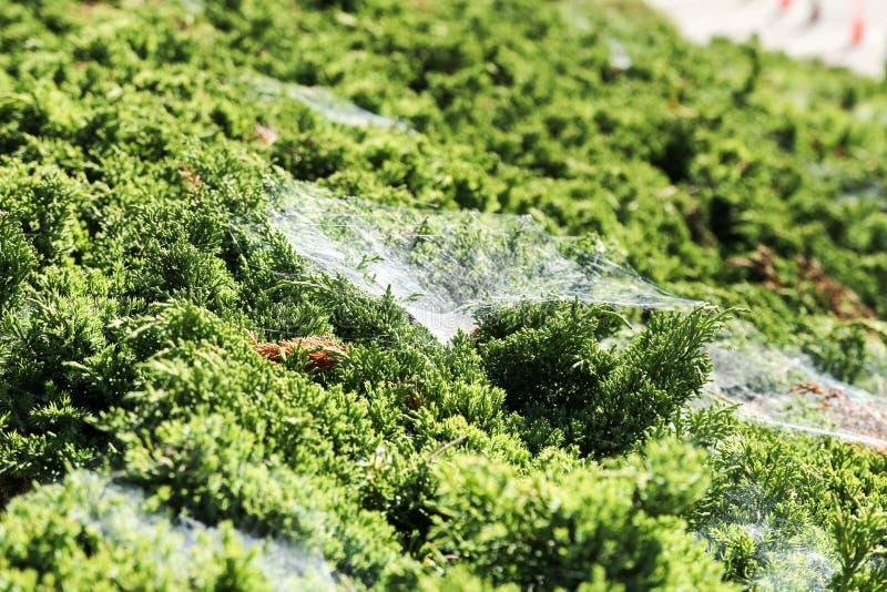 在绿草上的蜘蛛网 库存照片