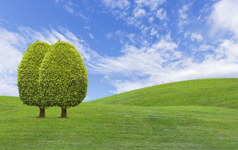 在绿草小山的树 库存图片
