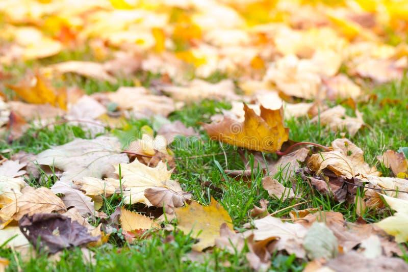 在绿草放置的下落的叶子 图库摄影