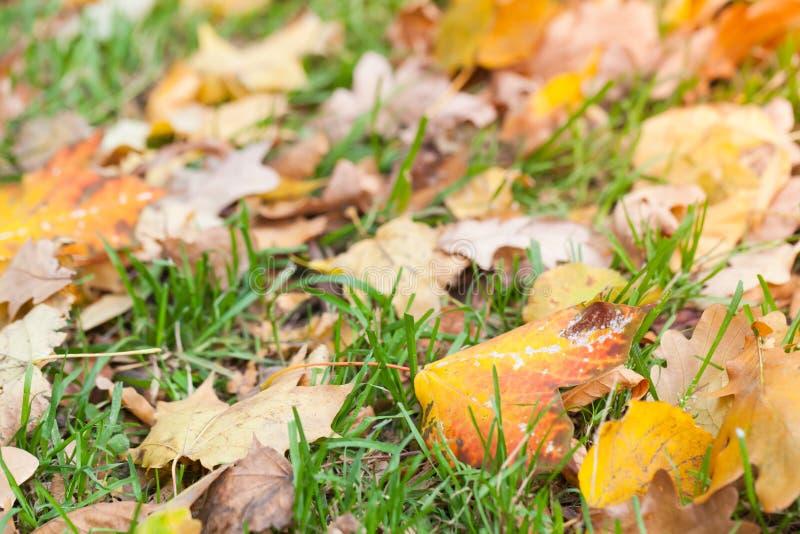 在绿草放置的秋季叶子 免版税库存图片