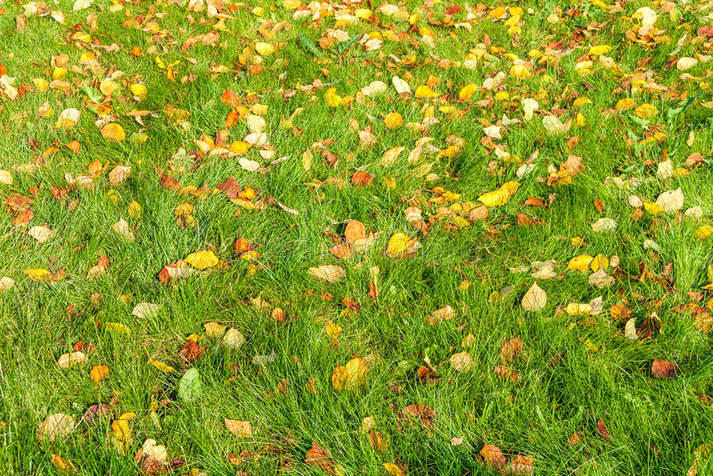 在绿草的下落的叶子 库存照片