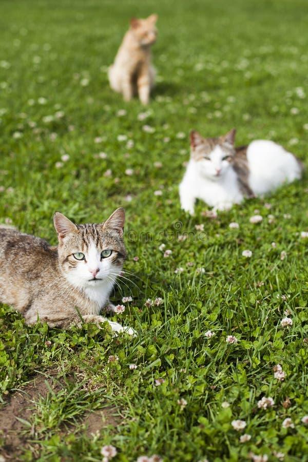 在绿草的猫背景 免版税库存照片