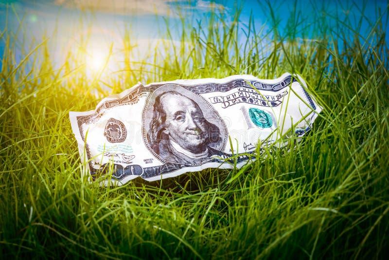 在绿草的美元 库存图片