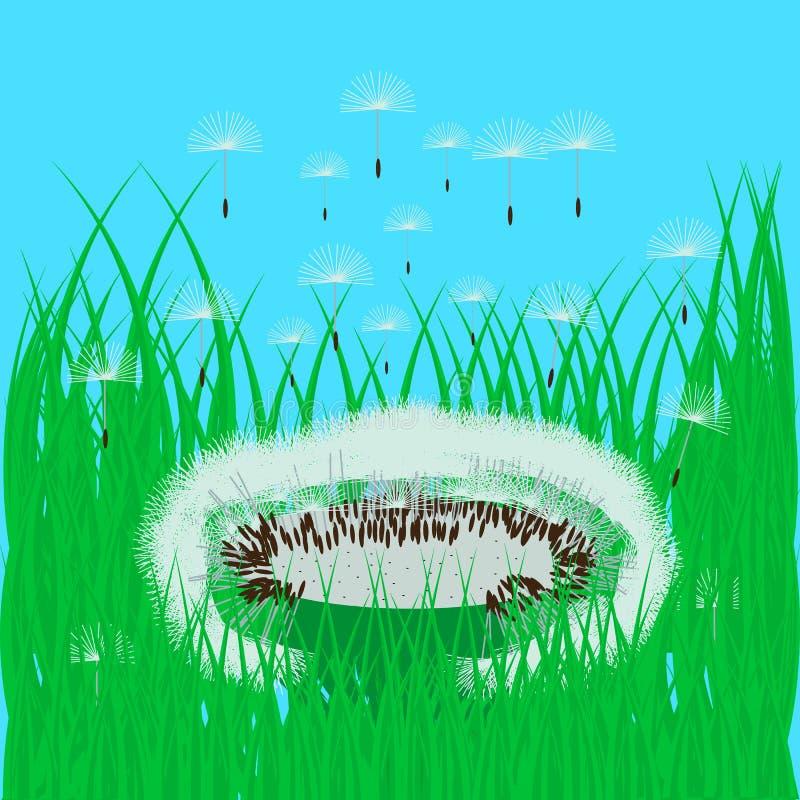 在绿草的蒲公英 图库摄影